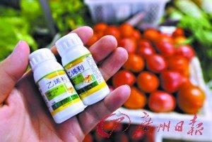 多省西红柿使用蔬菜催熟剂 1亩地可多赚3000元