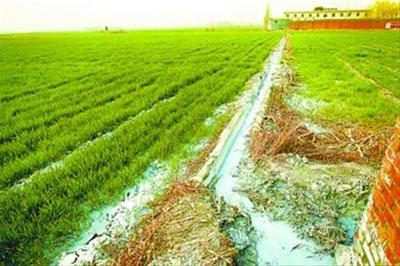 河南造纸厂污水浇麦田 农民只卖不吃