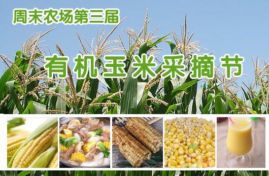 周末农场第三届有机玉米采摘节
