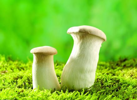 教你如何辨别野生蘑菇