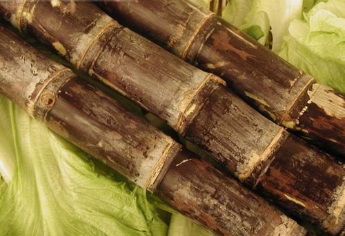 喜欢吃甘蔗的朋友注意了,切记不要吃霉变的甘蔗