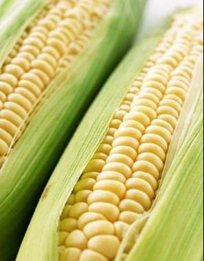 常吃玉米可预防高血压