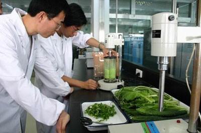 有虫眼儿的菜是否安全?菜心等多层蔬菜是否含农药残留?