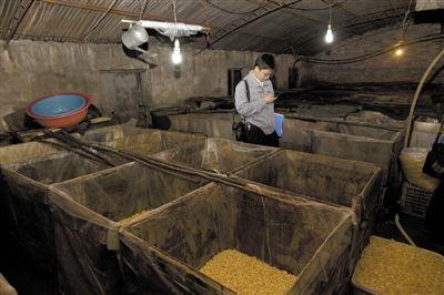 北京房山查封用工业化学物漂白豆芽黑作坊