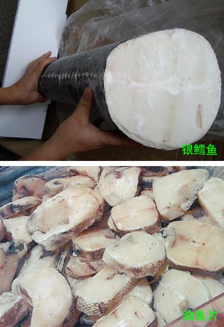 教你如何分辨油鱼(龙鳕鱼)和银鳕鱼的真假