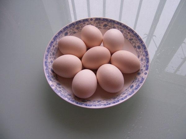 柴鸡蛋_周末农场养殖柴鸡