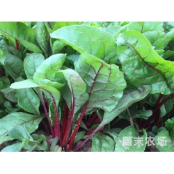 有机红甜菜