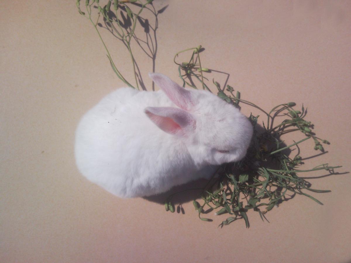 长尾巴的兔子_周末农场养殖兔子